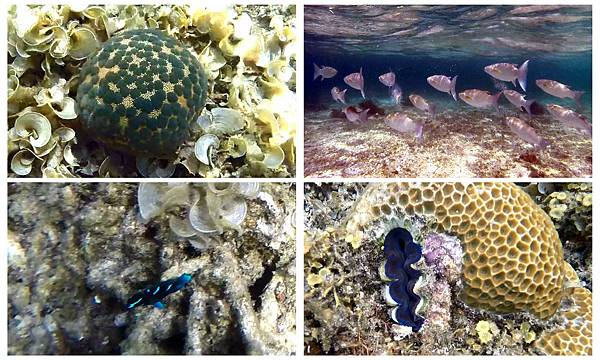 39-Calumbuyan Island, 午餐,CORON-Tour G 饅頭海星 硨磲貝.jpg