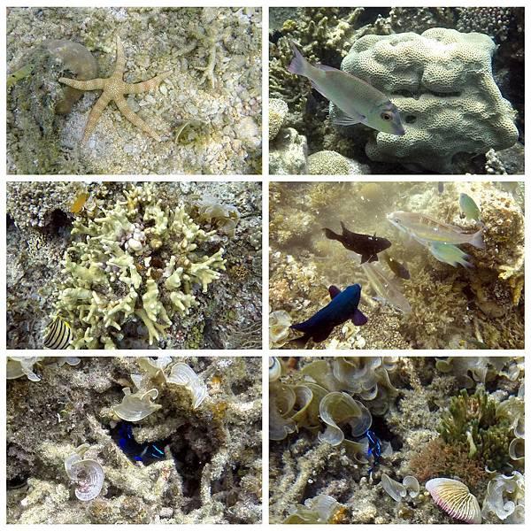 40-Calumbuyan Island, 午餐,CORON-Tour G.jpg