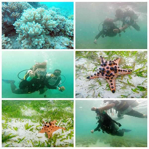 36-薄荷島 Bohol Shores 酸酸.jpg