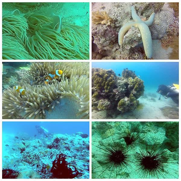 38-薄荷島 Bohol Shores 酸酸.jpg