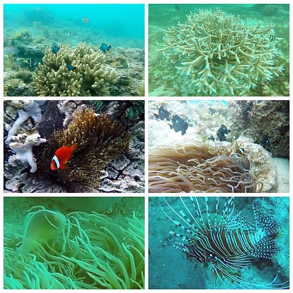 37-薄荷島 Bohol Shores 酸酸.jpg