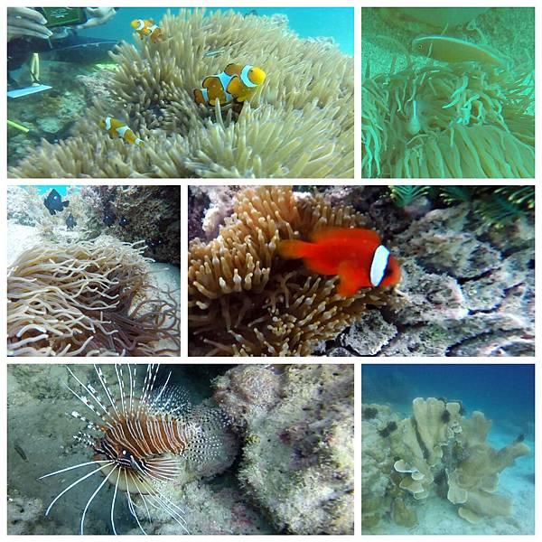 39-薄荷島 Bohol Shores 酸酸.jpg