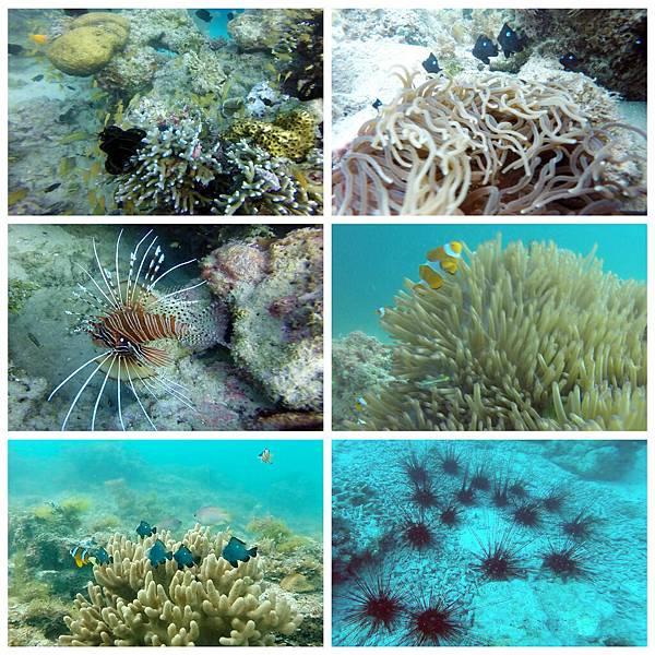 40-薄荷島 Bohol Shores 酸酸.jpg