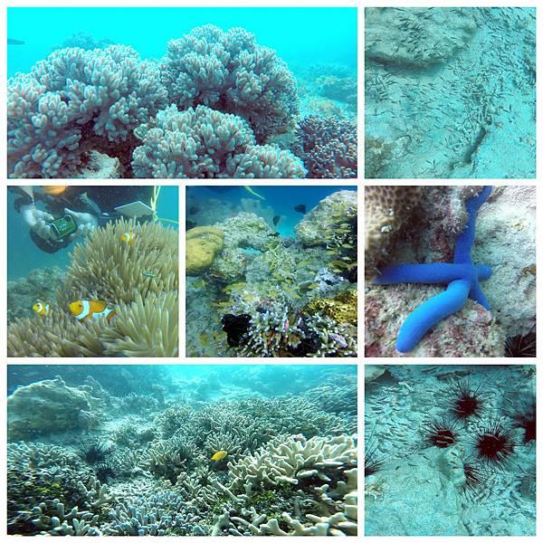 41-薄荷島 Bohol Shores 酸酸.jpg