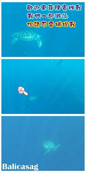 08-巴里卡薩大斷層浮潛 酸酸.jpg