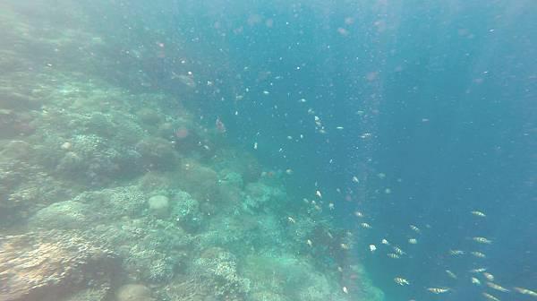 16-巴里卡薩大斷層浮潛 酸酸.jpg