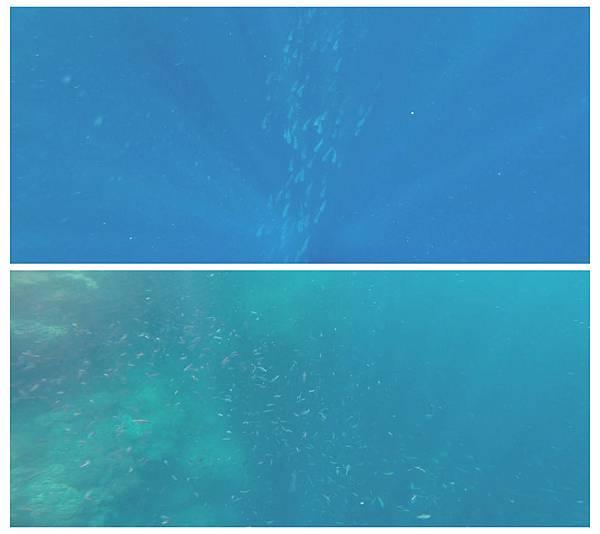 15-巴里卡薩大斷層浮潛 酸酸.jpg