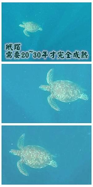 20-巴里卡薩大斷層浮潛 酸酸.jpg