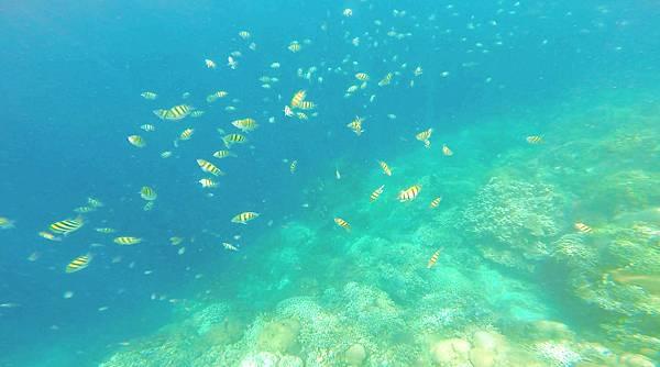 26-巴里卡薩大斷層浮潛 酸酸.jpg