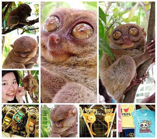 01-薄荷島眼鏡猴(酸酸).jpg