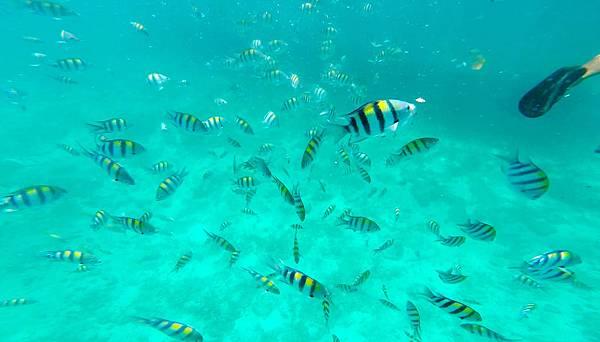 09-宿霧加勒比海島餐廳浮潛、釣魚.jpg