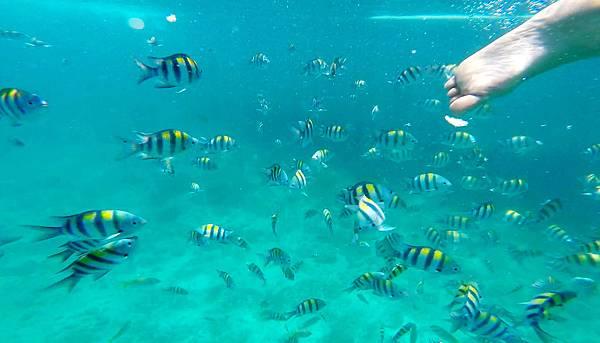 10-宿霧加勒比海島餐廳浮潛、釣魚.jpg