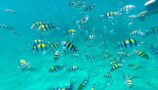 11-宿霧加勒比海島餐廳浮潛、釣魚.jpg