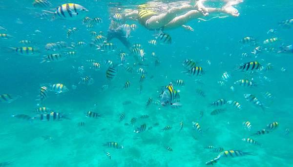 12-宿霧加勒比海島餐廳浮潛、釣魚.jpg