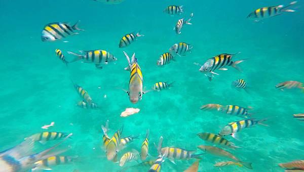 13-宿霧加勒比海島餐廳浮潛、釣魚.jpg