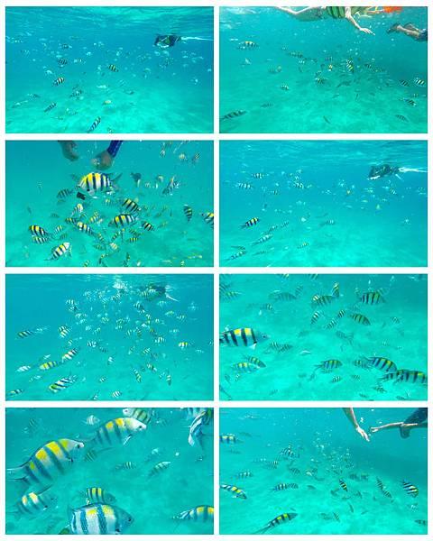 15-宿霧加勒比海島餐廳浮潛、釣魚.jpg