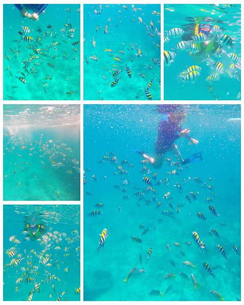16-宿霧加勒比海島餐廳浮潛、釣魚.jpg
