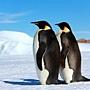 國王企鵝.jpg