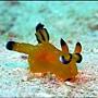 海蛞蝓(網路抓圖)01.jpg