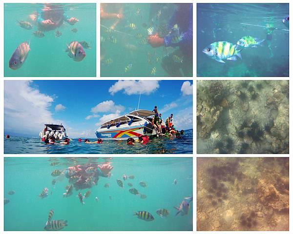 08-泰國普吉島-天堂島附近海域浮潛.jpg