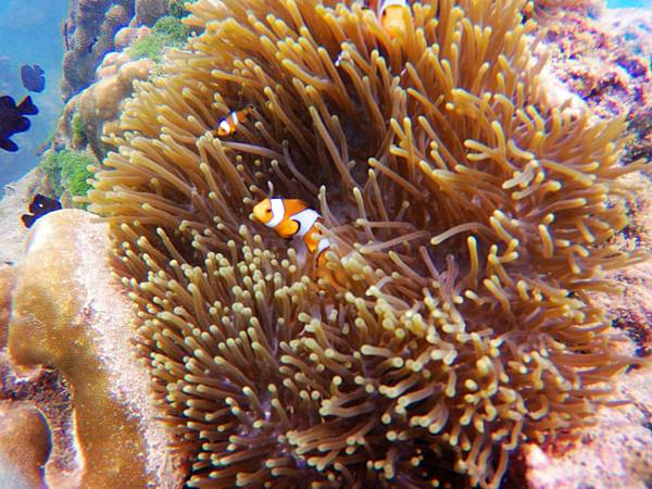 32-普吉島 珊瑚島潛水吳酸酸.JPG