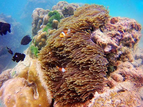 33-普吉島 珊瑚島潛水吳酸酸.JPG