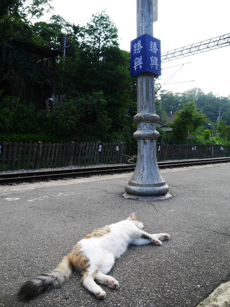 71-苗栗勝興車站.JPG