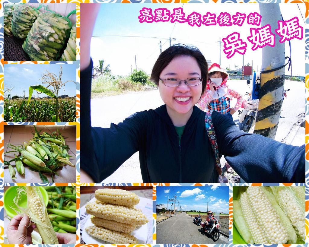 01-雲林元長北海道無毒玉米.jpg
