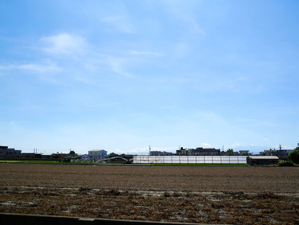 14-2-雲林元長北海道玉米.JPG