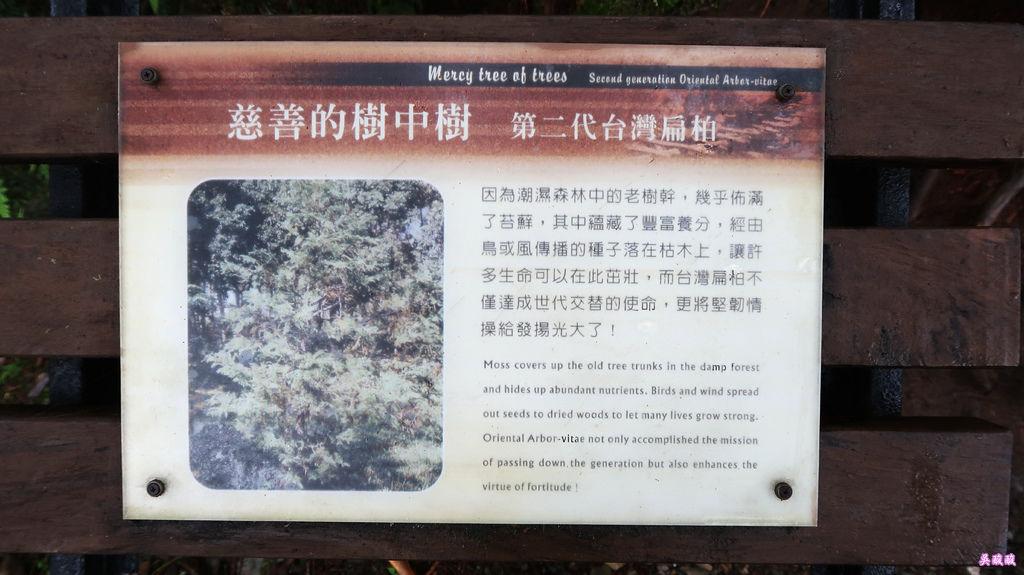 52-宜蘭太平山 見晴懷古步道.JPG