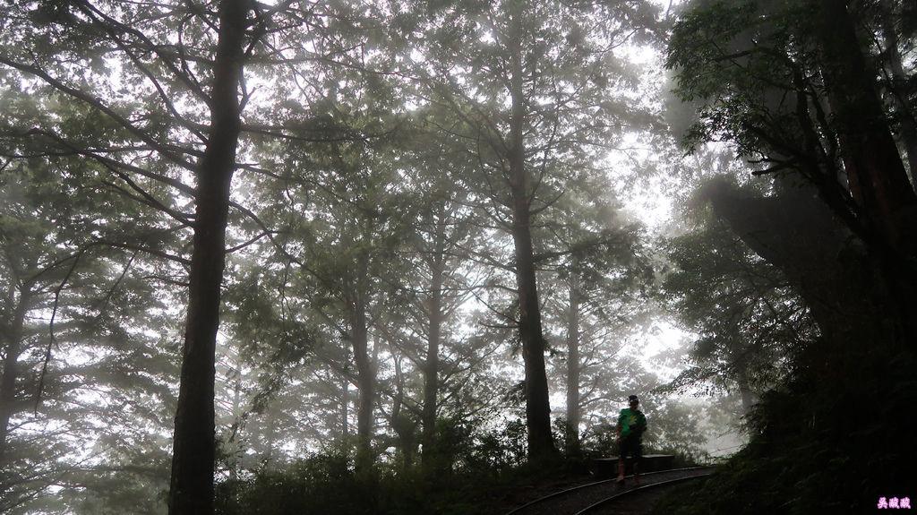56-宜蘭太平山 見晴懷古步道.JPG