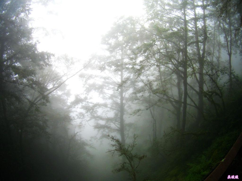 69-宜蘭太平山 見晴懷古步道.JPG