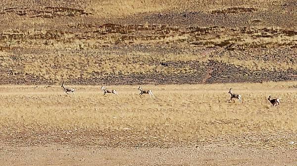 04-西藏阿里 一路向西 札達土林 阿里吃火鍋 酸酸西藏.JPG