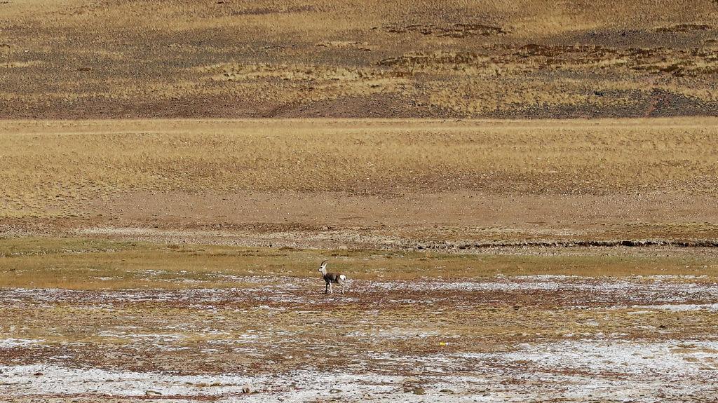 03-西藏阿里 一路向西 札達土林 阿里吃火鍋 酸酸西藏.JPG