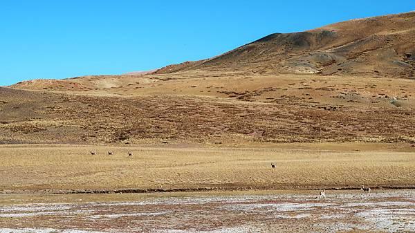02-西藏阿里 一路向西 札達土林 阿里吃火鍋 酸酸西藏.JPG