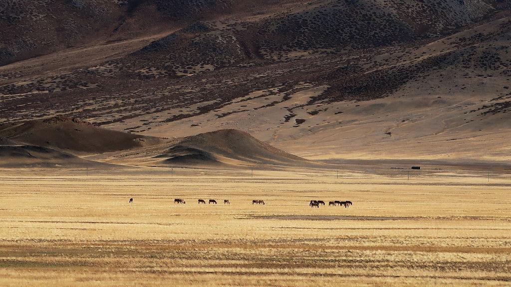 13-西藏阿里 一路向西 札達土林 阿里吃火鍋 酸酸西藏.JPG