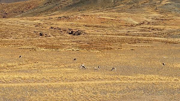 08-西藏阿里 一路向西 札達土林 阿里吃火鍋 酸酸西藏.JPG