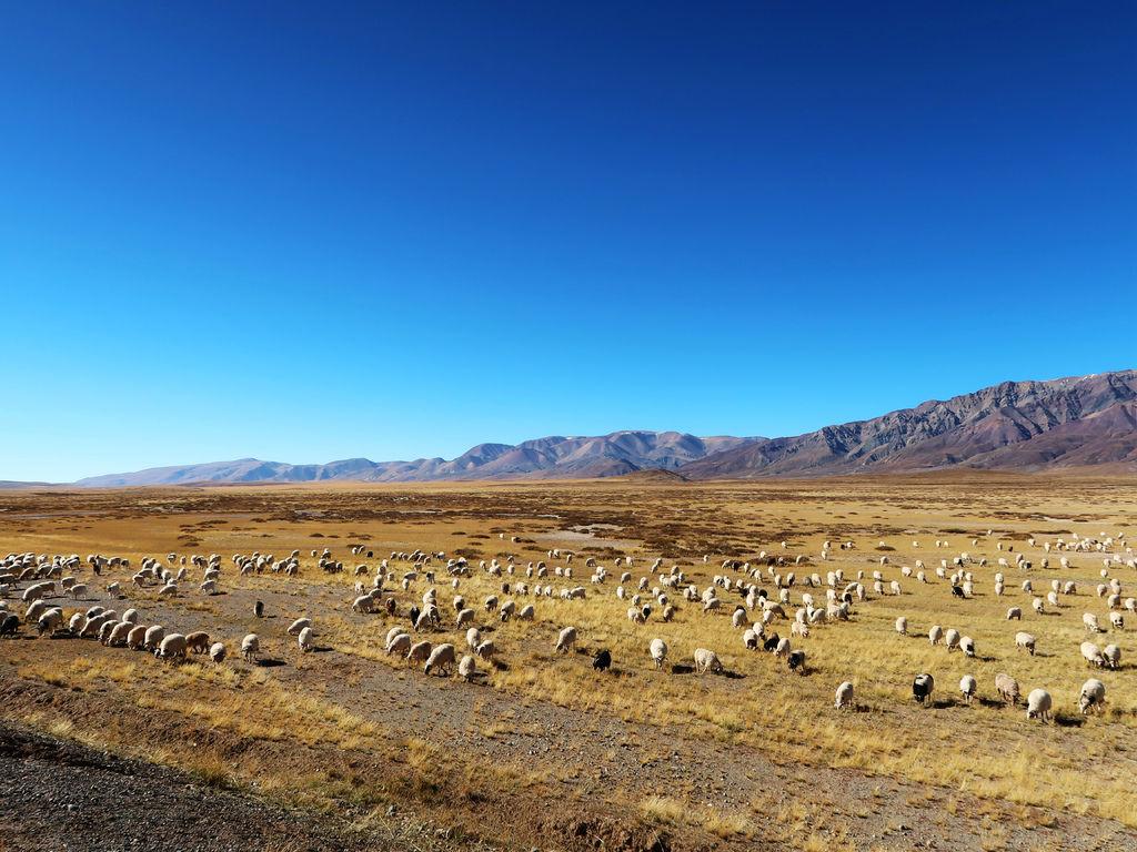 14-西藏阿里 一路向西 札達土林 阿里吃火鍋 酸酸西藏.JPG