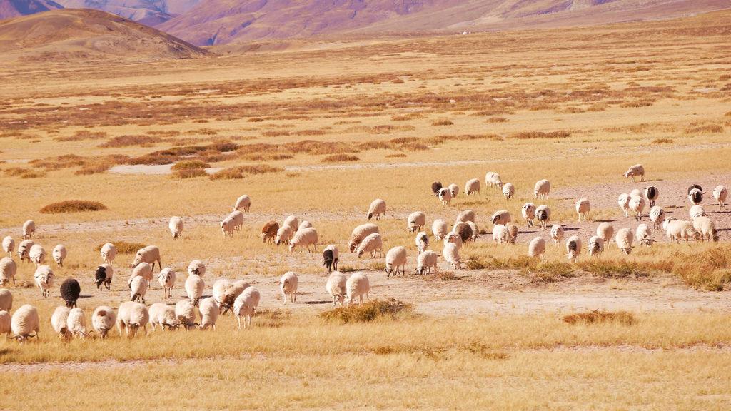 16-西藏阿里 一路向西 札達土林 阿里吃火鍋 酸酸西藏.JPG