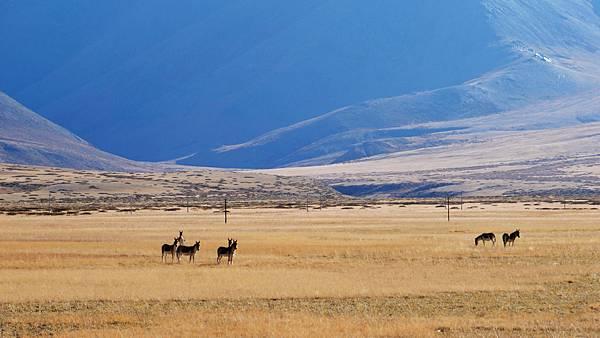 74-西藏阿里 一路向西 札達土林 酸酸西藏.JPG