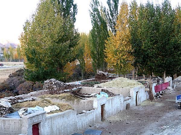 67-西藏阿里 札布讓村 土林民宿 藏民家庭旅館.JPG