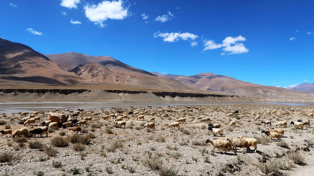 14-前往5200米珠峰大本營途中 西藏吳酸酸.JPG