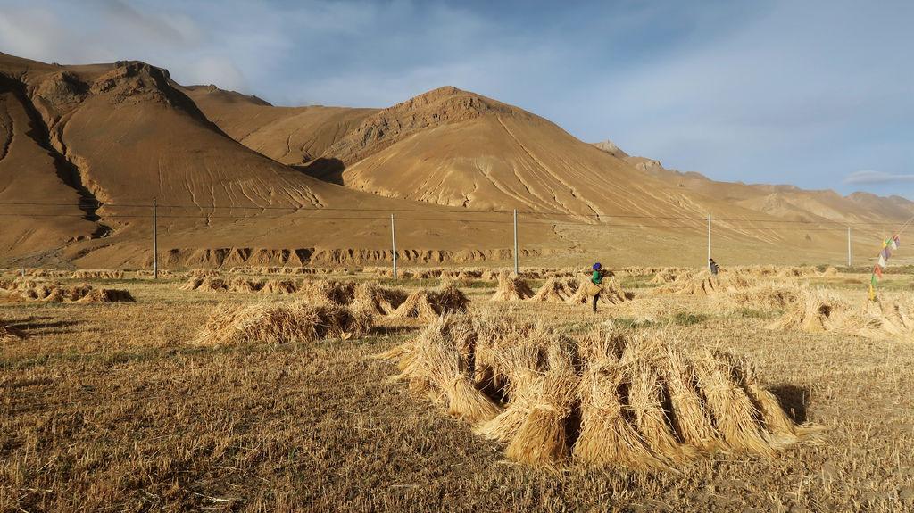 95-珠峰保護區村莊 西藏吳酸酸.JPG