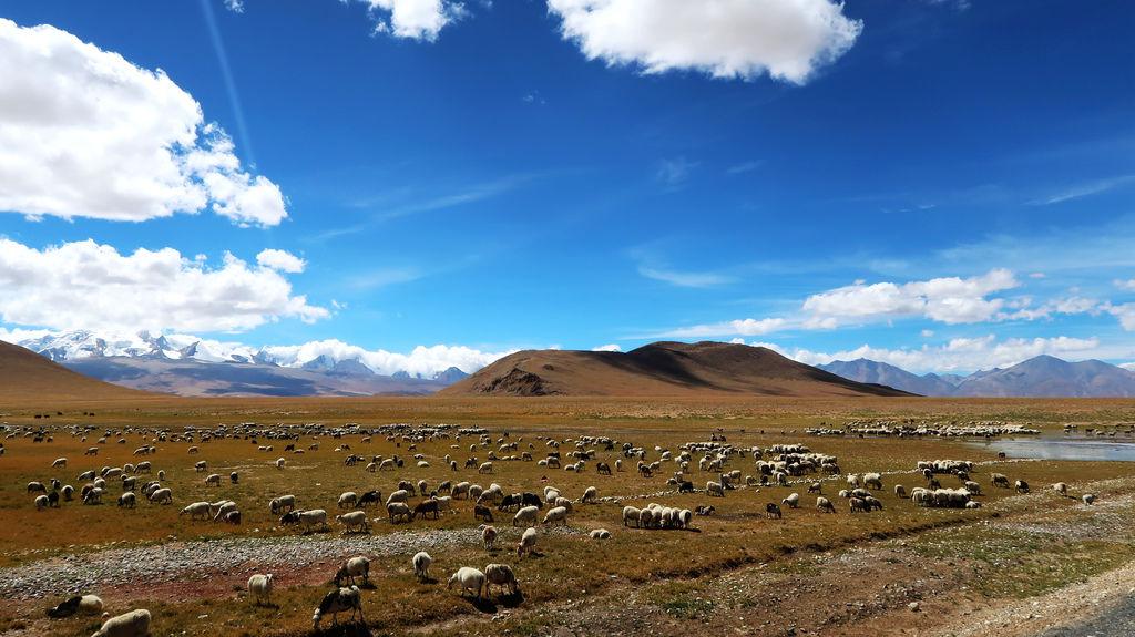 99-珠峰保護區 佩枯措 希夏邦馬峰.JPG