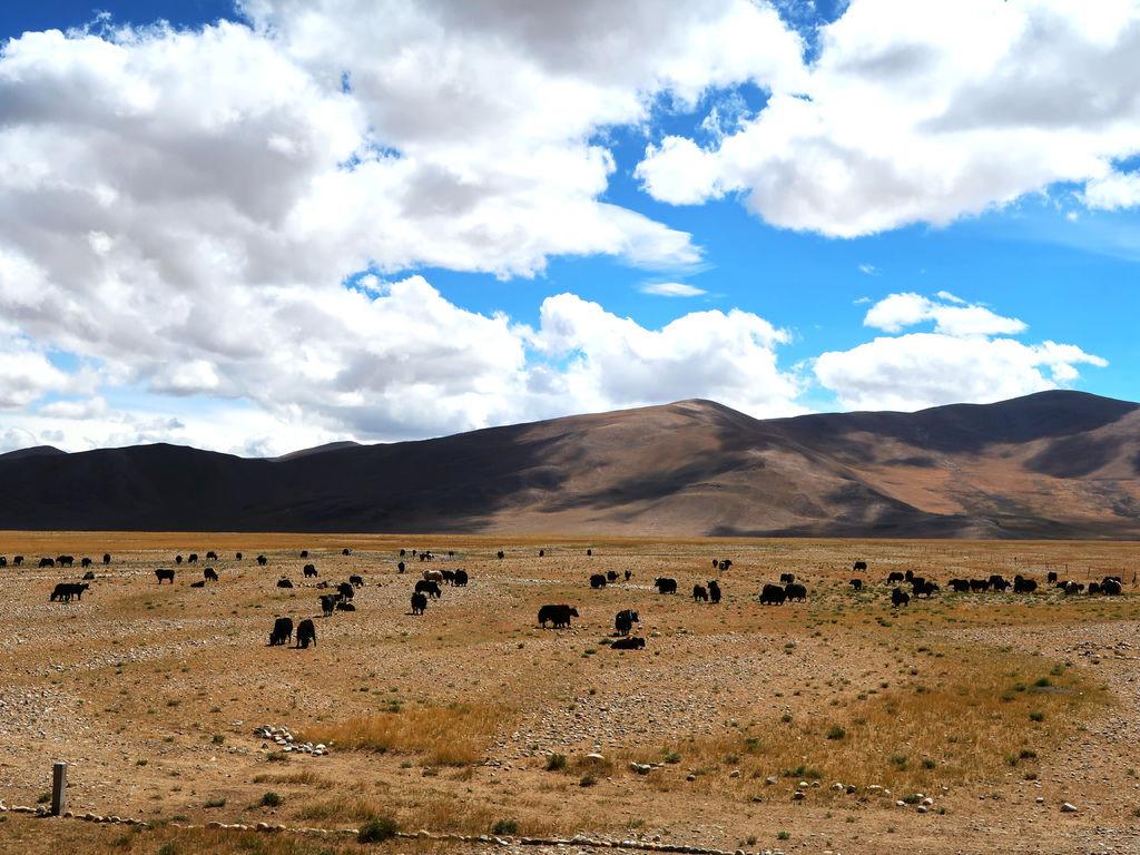 98-珠峰保護區 佩枯措 希夏邦馬峰.JPG