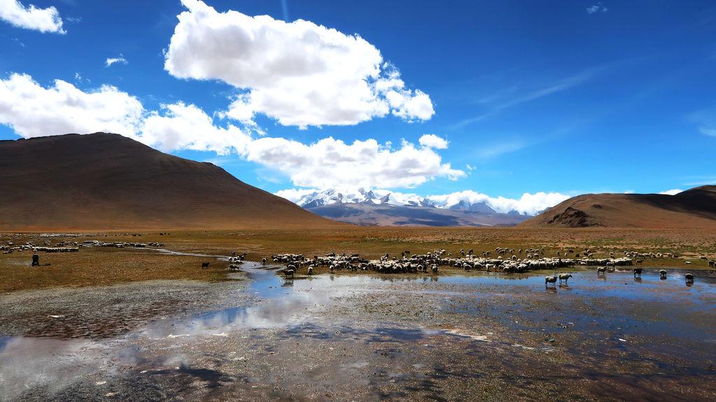 100-珠峰保護區 佩枯措 希夏邦馬峰.JPG