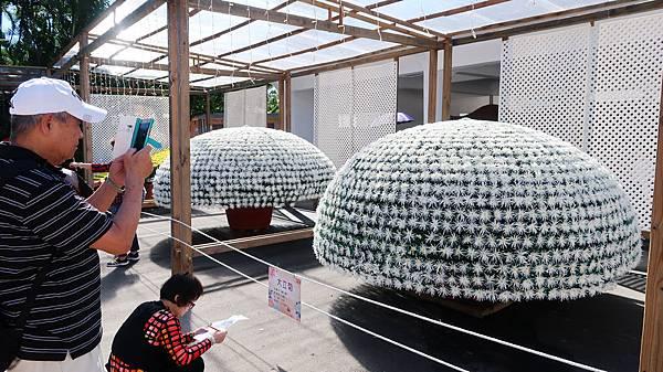 67-2017士林官邸菊展 大立菊.JPG