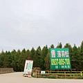 06-桃園八德落羽松森林.JPG