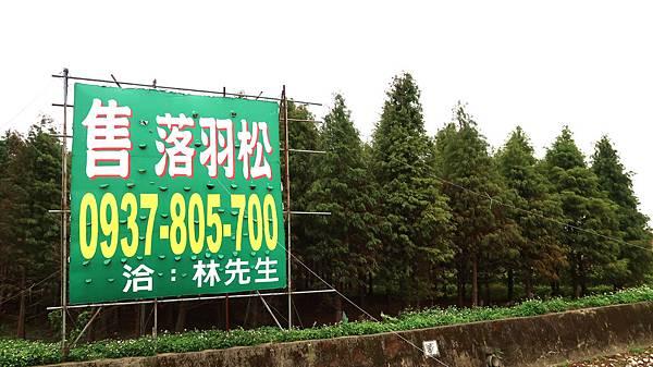 07-桃園八德落羽松森林.JPG