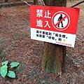33-桃園八德落羽松森林.JPG